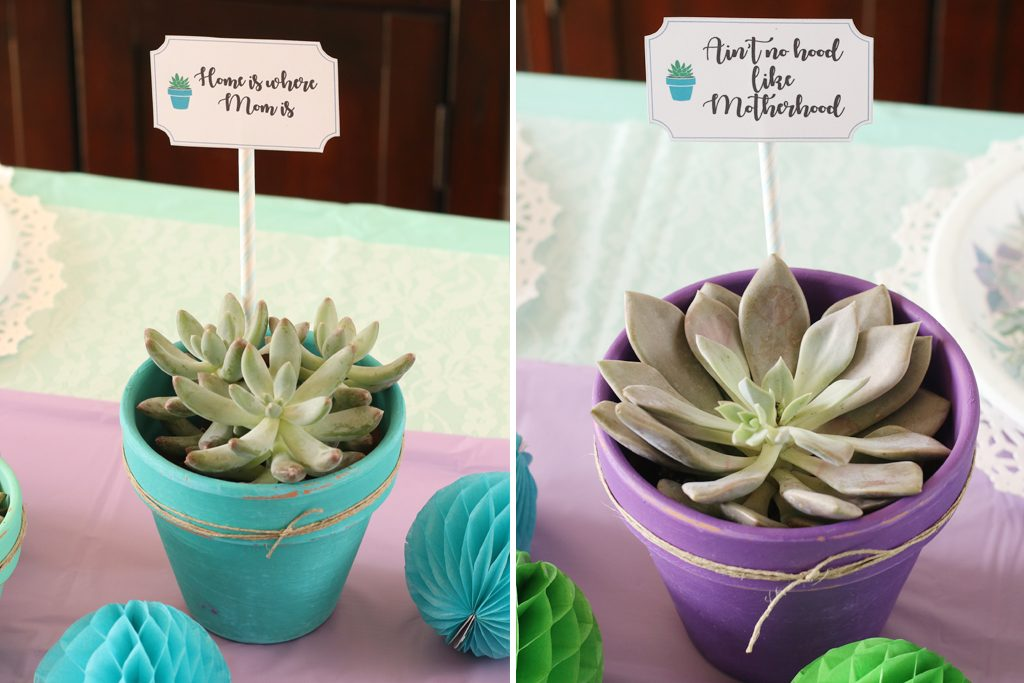 Mother's Day Brunch Succulents